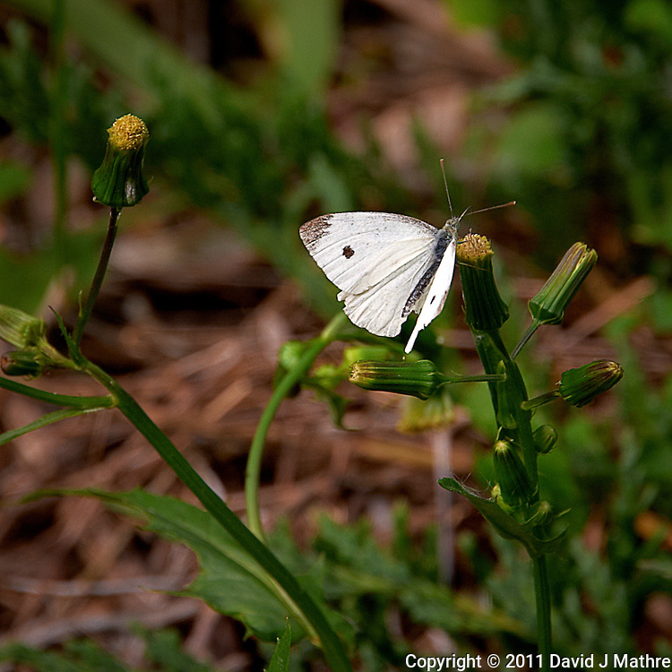 White Moth. Summer in New Jersey. Image taken with a Nikon D700 and 28-300 mm VR lens (ISO 200, 300 mm, f/8, 1/160 sec).