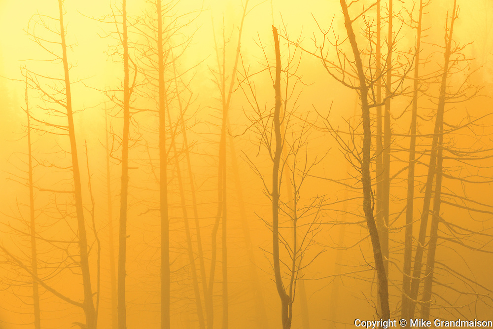 Trees at Lyons Lake at sunrise <br />WHiteshell Provincial Park<br />Manitoba<br />Canada
