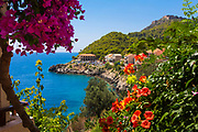 Pink flowers by the coast of a Greek town