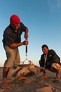 Giant River Turtle (Podocnemis expansa) Jose Belmejo weighing   CAPTIVE-REARING PROGRAM FOR REINTRODUCTION TO THE WILD<br /> CITES II      IUCN ENDANGERED (EN)<br /> Playita Beach, (mid) Orinoco River, 110 Km N of Puerto Ayacucho. Apure Province, VENEZUELA. South America. <br /> L average 90cm, Wgt 30-45kg. Largest fresh water river turtle in S. America.<br /> RANGE: Amazonia, Llanos & Orinoco of Colombia, Venezuela, Brazil, Guianas, Ecuador, Peru & Bolivia.<br /> Project from Base Camp of the Protected area of the Giant River Turtle (& Podocnemis unifilis). (Refugio de Fauna Silvestre, Zona Protectora de Tortuga Arrau, RFSZPTA)<br /> Franklin Tobar looking on