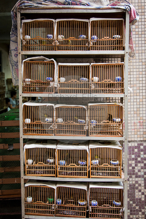 Caged song birds at a market in Shanghai, China
