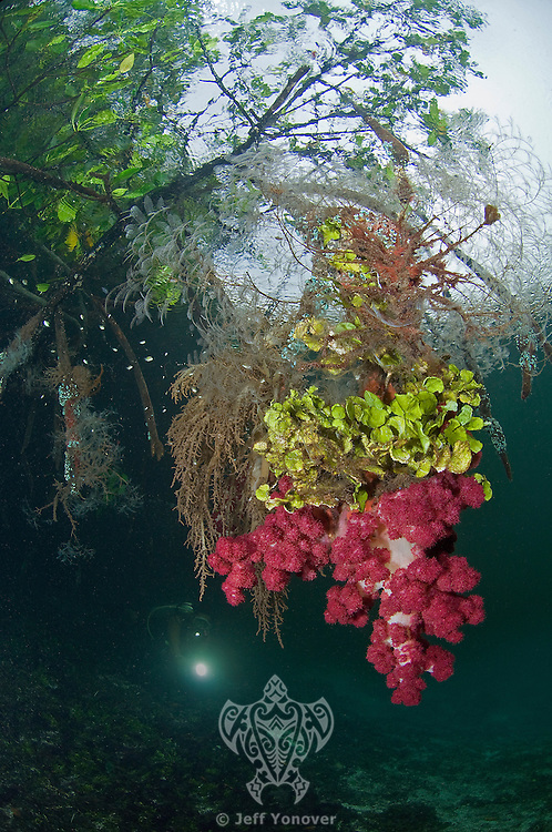 Diver in Blue Water Mangroves