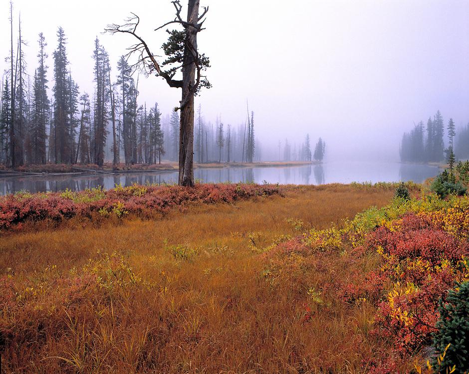 Autumn creeps mistily into Yellowstone National Park, Wyoming.