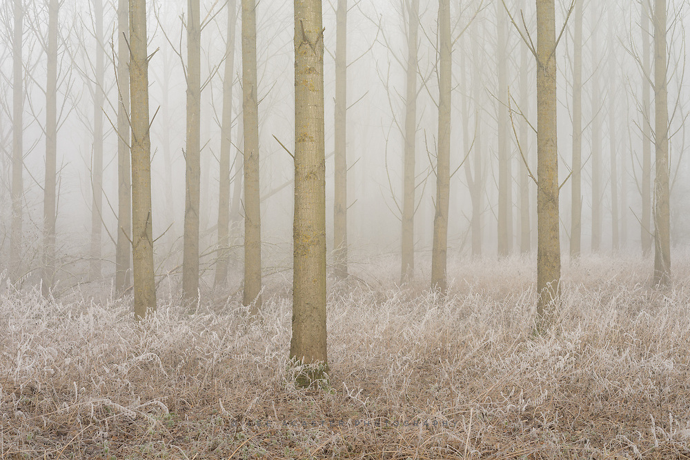 Another from yesterday morning in the fog and frost.
