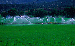 Crop Irrigation Agriculture