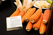 FLINT CORN<br /> Curator: Jay Bost, GoFarm Hawai'i<br /> Chef: Ed Kenney and Dave Caldiero, Town