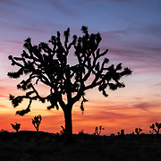 15 - Joshua Tree National Park