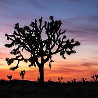 15 - Joshua Tree National Park
