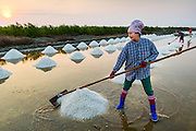 """28 MARCH 2014 - NA KHOK, SAMUT SAKHON, THAILAND:  Workers rake salt in an evaporation pond in Samut Sakon province. Thai salt farmers south of Bangkok are experiencing a better than usual year this year because of the drought gripping Thailand. Some salt farmers say they could get an extra month of salt collection out of their fields because it has rained so little through the current dry season. Salt is normally collected from late February through May. Fields are flooded with sea water and salt is collected as the water evaporates. Last year, the salt season was shortened by more than a month because of unseasonable rains. The Thai government has warned farmers and consumers that 2014 may be a record dry year because an expected """"El Nino"""" weather pattern will block rain in mainland Southeast Asia. Salt has traditionally been harvested in tidal basins along the coast southwest of Bangkok but industrial development in the area has reduced the amount of land available for commercial salt production and now salt is mainly harvested in a small parts of Samut Songkhram and Samut Sakhon provinces.   PHOTO BY JACK KURTZ"""