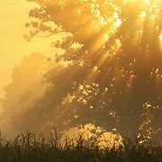 &quot;Golden Blessings&quot;<br />