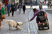 Nederland, Nijmegen, 5-5-2014Een vrouw met een lichamelijke beperking in een rolstoel, scootmobiel, speelt met haar hulphond bij een waterkunstwerk in het centrum van de stadf. Deze wordt echter zo enthousiast dat hij de vrouw bijna omtrekt. Het is een grappig gezicht. Foto: Flip Franssen/Hollandse Hoogte
