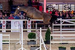 075, Crodino Van Den Bosrand Z<br /> BWP Hengstenkeuring -  Lier 2020<br /> © Hippo Foto - Dirk Caremans<br />  17/01/2020