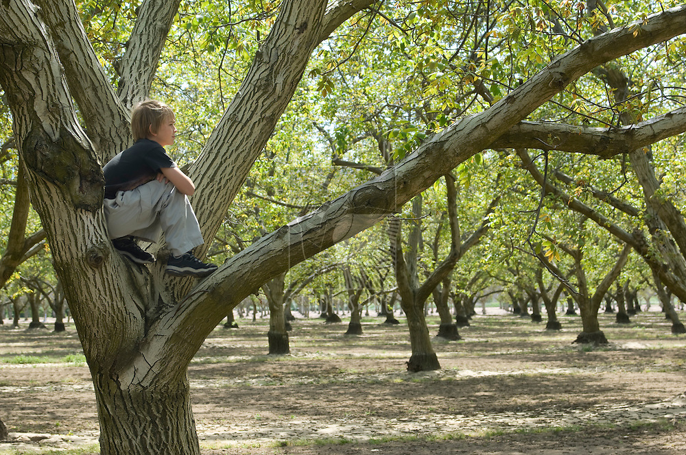 Boy sitting in a tree enjoying nature in an orchard