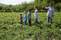 Parents and children (5-9) in a row in strawberry field father pointing
