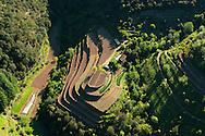 France, Languedoc Roussillon, Gard, Cevennes, Valleraugue, Yolande Nouguier, La Pieyre, culture d'oignons doux des Cévennes, terrasses labourées pour le repiquage, vue aérienne