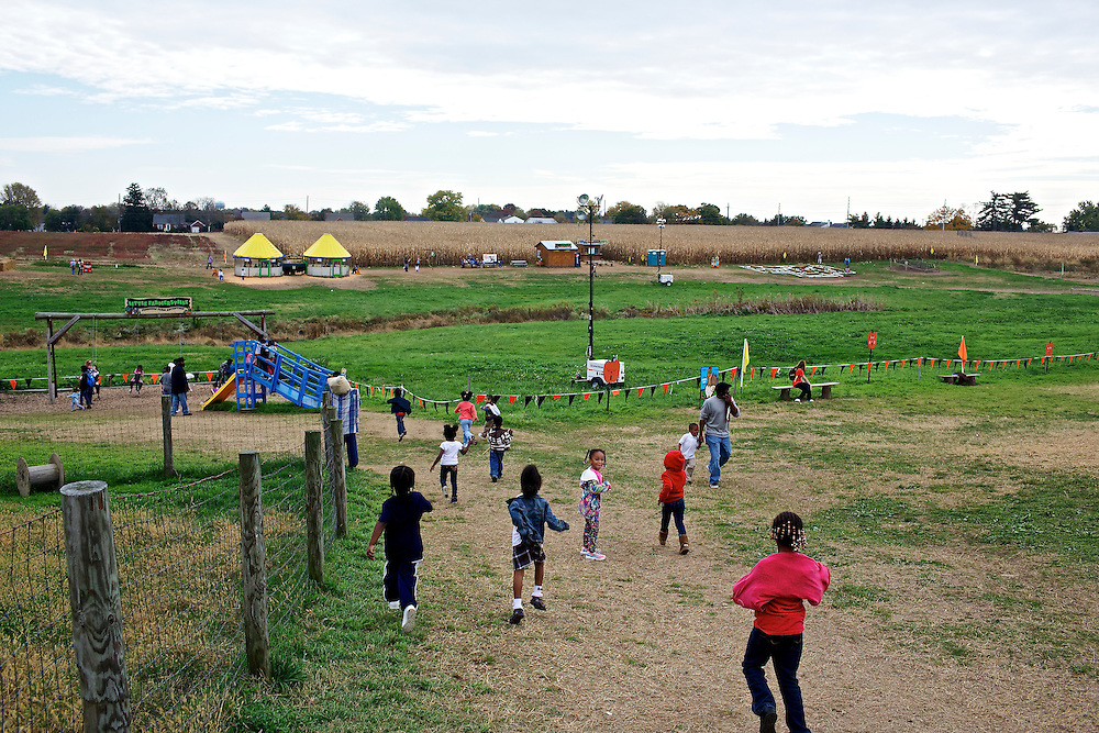"Calvin Rodwell Elementary School Pre-kindergarten students charge into the fields full of games and activities at Summers Farm in Frederick, MD on Oct. 24, 2012. The visit to the farm was part of a ""Common Core"" reading and learning unit for their class, which aims to follow up non-fiction reading with learning in the field. The day prior the children read a book about going to a farm."