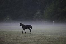 20100827_ridgewayMareAndFoal