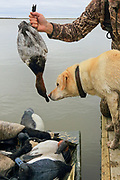 A successful hunter with his Yellow Labrador Retriever.