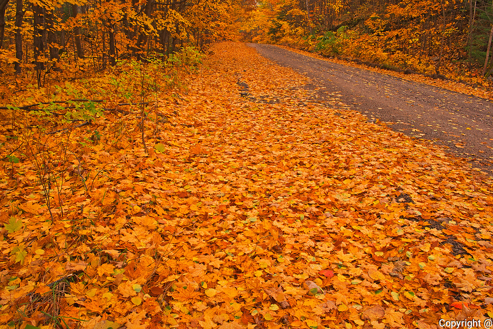 Country road in autumn color<br />