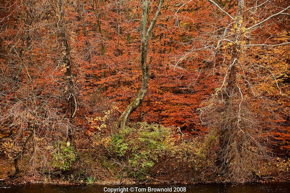 Autumn color along the Yellow Breaches creek