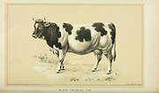 Spotted cow from Cattle and dairy farming. Published 1887 by Govt. Print. Off. in Washington. United States. Bureau of Foreign Commerce (1854-1903)