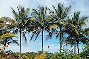 Bocas del Toro es una provincia de Panamá. Su capital es la ciudad de Bocas del Toro.<br /> Las Islas del Archipiélago de esta provincia son uno de los últimos paraísos naturales y culturales de Latinoamérica. Bocas del Toro es aun un destino bastante virgen e inexplorado, conservando sus tesoros culturales y naturales. Panamá, 3 de octubre de 2012. (Edgar Miranda/Istmophoto)