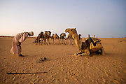 Camel herders stop for prayers every evening at sunset.