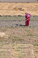 A woman at work in the fields. 66% of the population are involved in agriculture which is responsible for 33% of the GDP, which in 2010 was $562.
