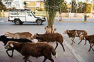 Street life on Saturday, Nov. 8, 2014, in Addis Ababa, Ethiopia. LCMS Communications/Erik M. Lunsford