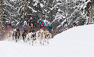 Musher Roxy Wright competing in the Fur Rendezvous World Sled Dog Championships at Goose Lake in Anchorage in Southcentral Alaska. Winter. Afternoon.