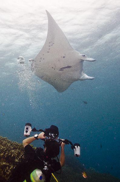 Yap, Micronesia, manta rays and reef fish at Manta Fest 2011 at Manta Ray Bay Hotel.