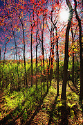 Sunlight Through the Fall Forest at Gardiner Park