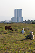 Farmers graze their cattle in a field beside new real estate projects in the province of Hoa Lac, Vietnam, Southeast Asia