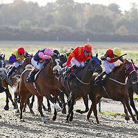 Lingfield 13th November