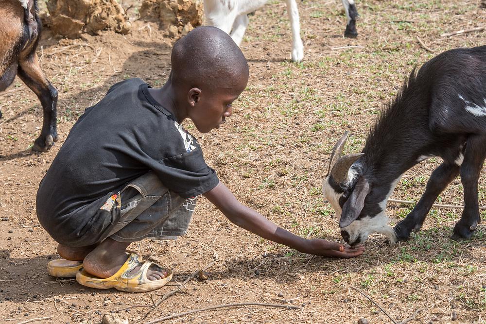 A boy feeds a goat in Ganta,Liberia