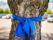 "06 MAY 2020 - DES MOINES, IOWA: Blue ribbons honoring nurses around a tree at Unity Point Health Iowa Methodist Medical Center in Des Moines. Des Moines first responders, the Iowa State Patrol, and utility companies made an ""Appreciation Loop"" around the hospital on National Nurses' Day to thank nurses and other care givers at the hospital for the care they are providing during the COVID-19 (Coronavirus/SARS-CoV-2) pandemic. Iowa reported 10,404 confirmed cases of COVID-19 statewide Wednesday, about 2,500 cases in the Des Moines metropolitan area. Acting against the advice of many medical professionals, the Governor of Iowa has started reopening businesses in the state. Businesses in the Des Moines area, and other communities with a high number of cases are not allowed to reopen.       PHOTO BY JACK KURTZ"