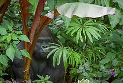 Tropical foliage border at John Massey's garden with gorilla sculpture. Includes Ensete maurelli (Ethiopian black banana) and Begonia luxurians (Palm leaf begonia)