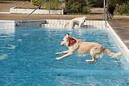 307 Hund im frei bad