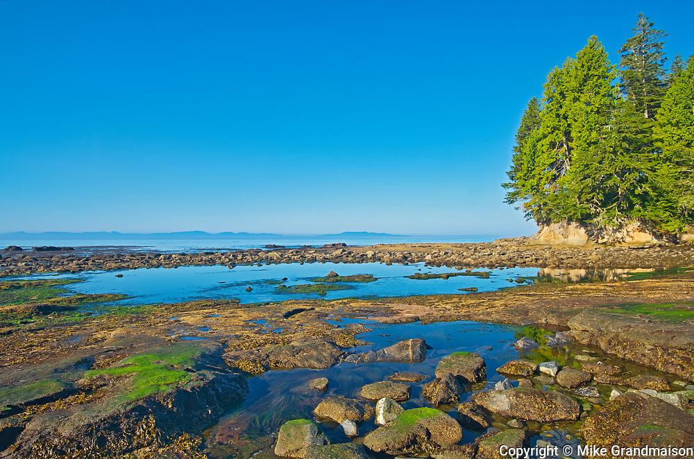 Botanical Beach at low tide (Formerly Botanical Beach  Provincial Park), Juan de Fuca Provincial Park, British Columbia, Canada