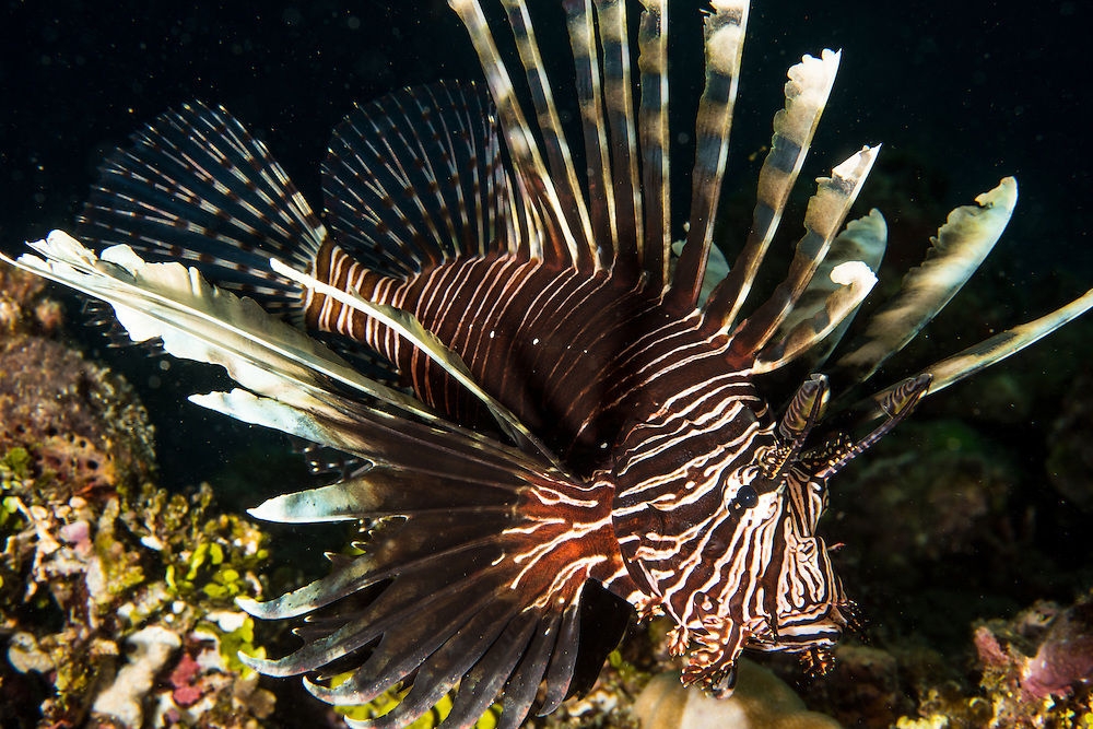 The amazing underwater life of the South Philippines.