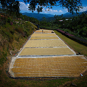 The drying patio of La Candelilla coffee farm is shown during the 2016 harvest. (Joshua Trujillo, Starbucks)