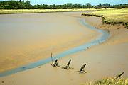 Muddy creek, River Ore, Shingle Street, Suffolk, England
