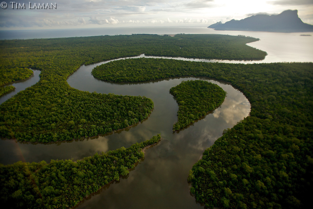 Aerial view of river and mangrove forest in the Sarawak Mangrove Reserve near Kuching, Malaysia.