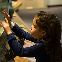 Springfield Science Museum, Springfield, MA.