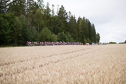 The peloton rides past a wheat field on Stage 2 of the Ladies Tour of Norway - a 140.4 km road race, between Sarpsborg and Fredrikstad on August 19, 2017, in Ostfold, Norway. (Photo by Balint Hamvas/Velofocus.com)