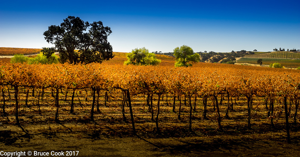 Sunrise Vineyard 5