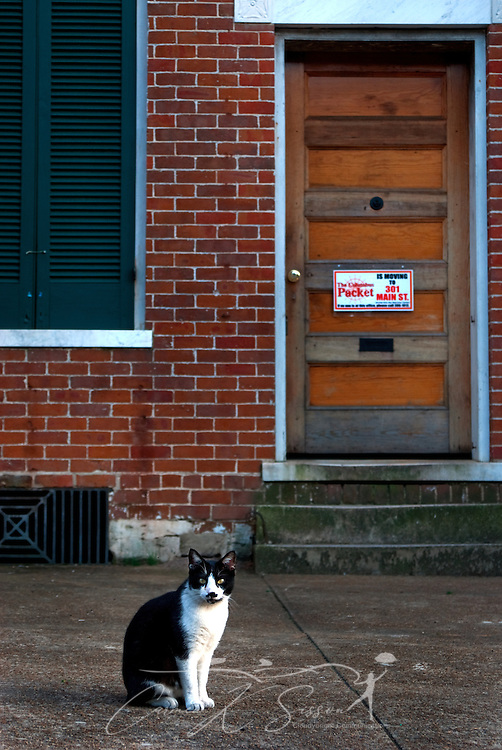 A black and white tuxedo cat sits outside the former office of the Columbus Packet in downtown Columbus, Miss. April 20, 2010. The Packet, a weekly newspaper, was founded in 1991 and lists a circulation of more than 11,000. (Photo by Carmen K. Sisson/Cloudybright)
