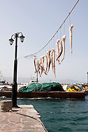 Octopus tenticles hanging to dry in the port of Molivos, Lesbos Island, Greece