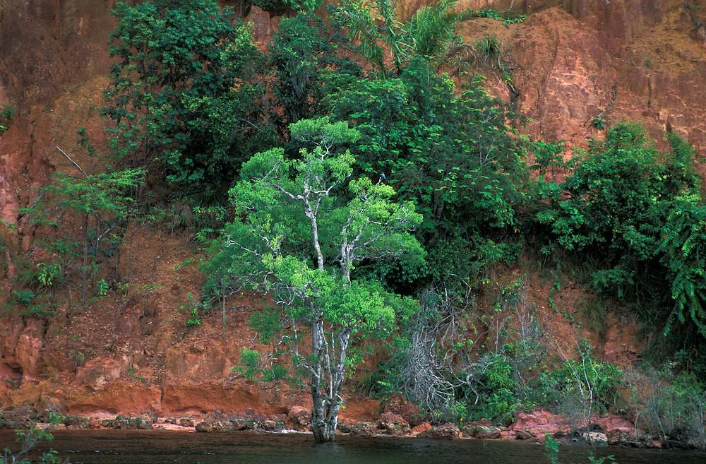 Tropical Forest along Rio Negro near Manaus, Amazonia, Brazil