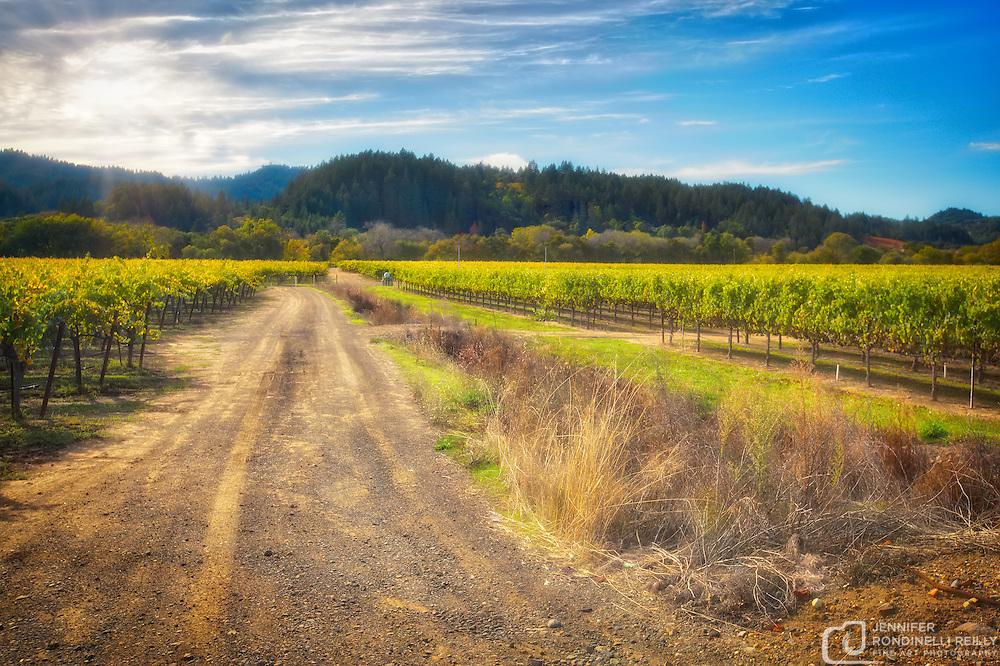 Vineyards of Sonoma.